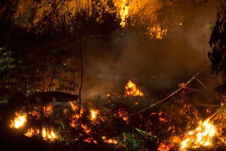 Peatland fires in Kapuas district, Borneo