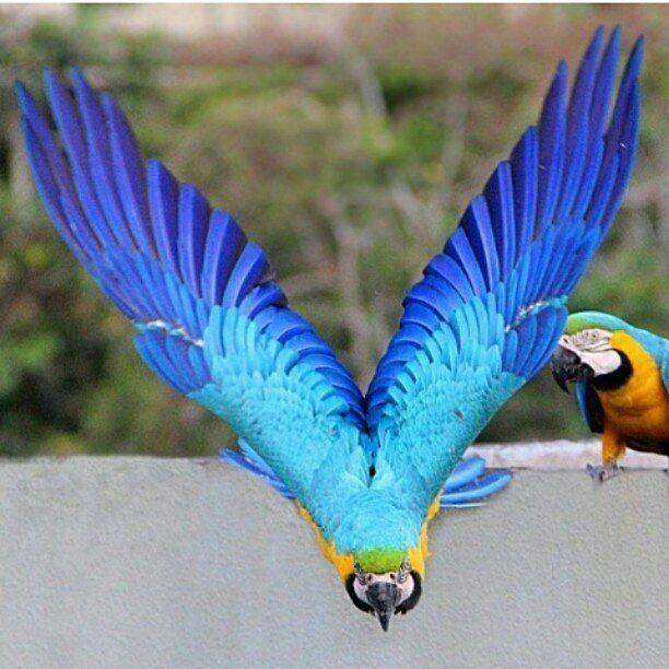 Excelente lunes! @Regrann from @mabelcornago -  Les deseo un año Victorioso sobre todo a mi bella Venezuela!!! -  #LaCuadraU #GaleriaLCU #Macaws #Nature #Guacamayas #regrann