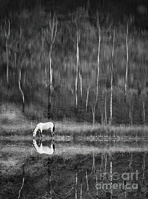 relection,landscape,wildlife,nature,black and white,trees,pond,lake,beauty,horse,drinking,horses,white horse,grass,