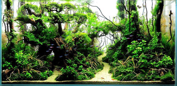 on http://tol.co/sQ6Jx Aquariums Art, Aqua Scapes, Aquarium Scaping ...