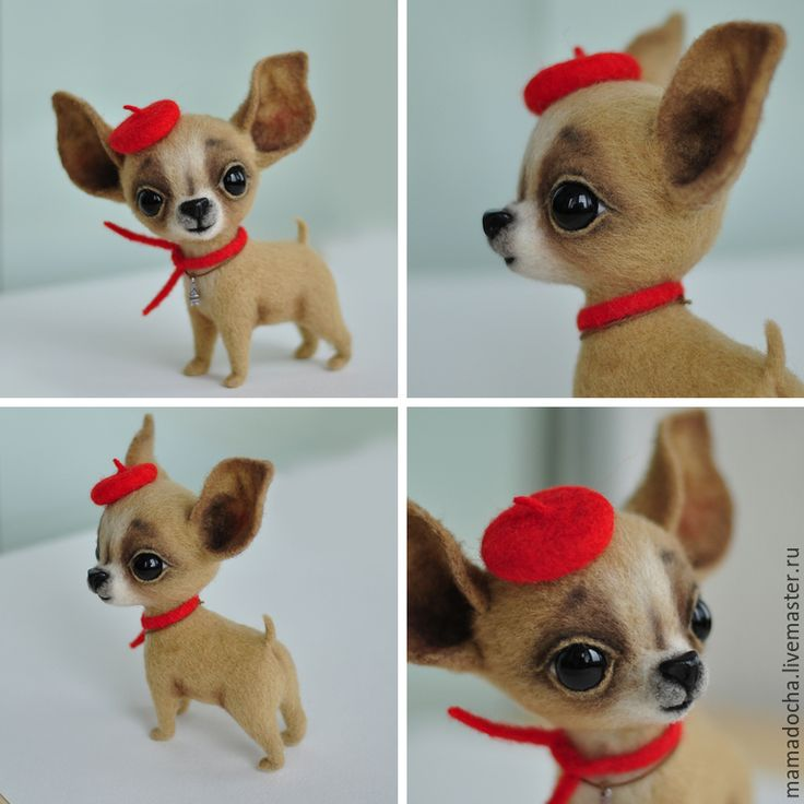 Купить Николя - ярко-красный, Франция, чихуахуа, чихуа, собака, французский стиль, парижский стиль