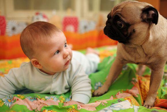 Gratis e-book 5 stappen naar maximale veiligheid voor hond en kind.