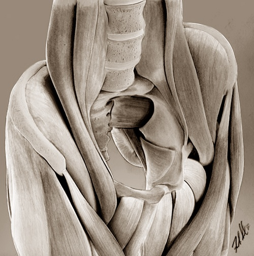 graphite  For my newest publication: Oblique pelvis revealing lumbar vertebrae and iliopsoas/anterior thigh muscles.