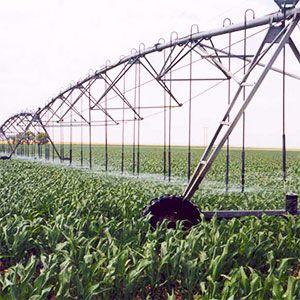 Existen tecnologías y estrategias de gestión disponibles que conservan el agua, pero los agricultores pueden cambiar sus actividades para aprovechar la innovación aumentando la zona a regar o cambiando a cultivos más intensivos en agua y estos cambios también pueden afectar al uso del agua.