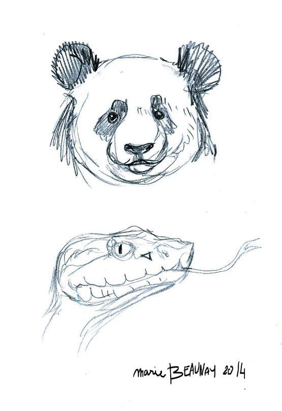 Croquis pr paratoire d 39 animaux un poster illustration - Croquis animaux ...