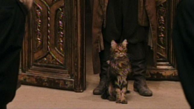Cat Harry S