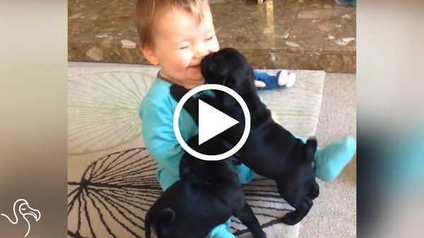 Dogs Who Love Their Babies