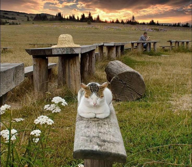 Shhhh .... meditating ..... oooommmm....: Cats, Animals, Eckhart Tolle, Zen Masters, Kitty Kitty, Feline, Photo