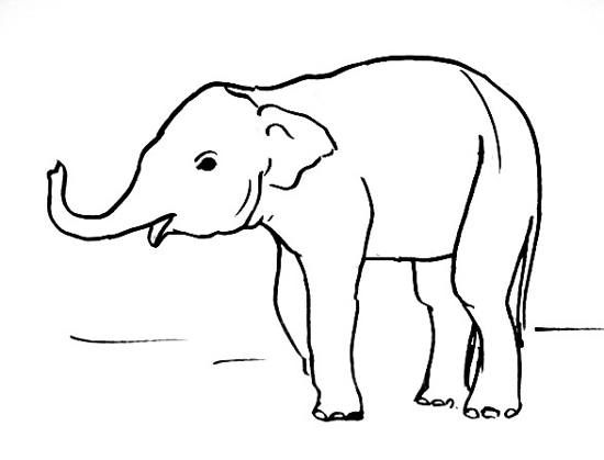 Baby elephant Drawing