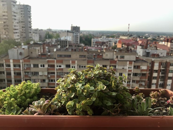 25+ best ideas about Apartment balcony garden on Pinterest | Small ...