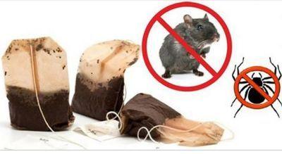 Infestazioni di topi e ragni: questo rimedio naturale li farà scomparire in poche ore. Vediamo i dettagli della semplicissima preparazione 21 maggio 2017 Infestazioni di topi ?