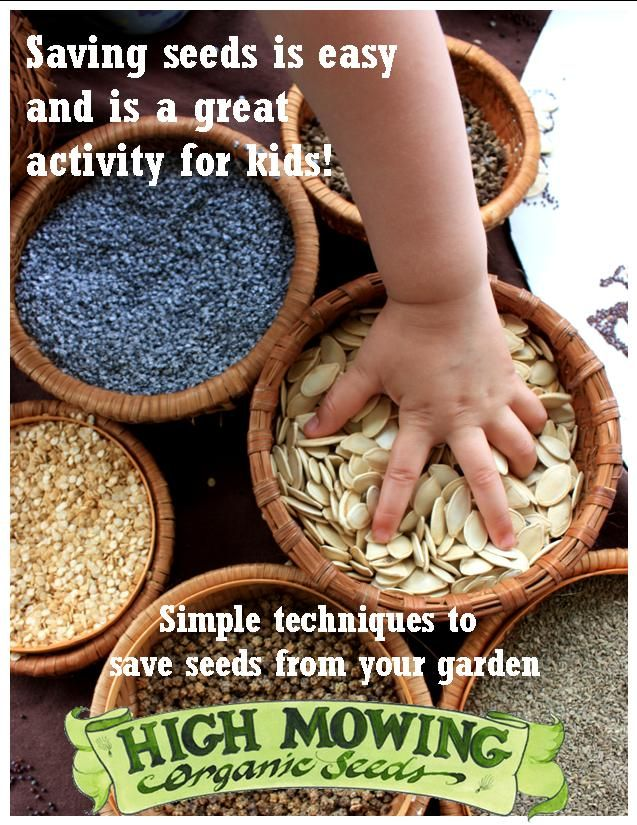 Seed saving encourages better food security and is a great activity for kids and adults alike. Check out these easy seed saving techniques for your favorite crops and learn how to Cross Your Own Hybrid in our latest article, Easy Seed Saving for Everyone!