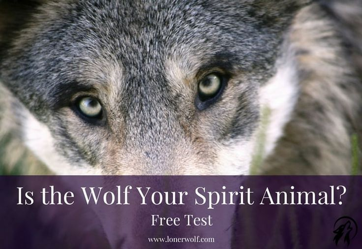Wolf Spirit Animal test image