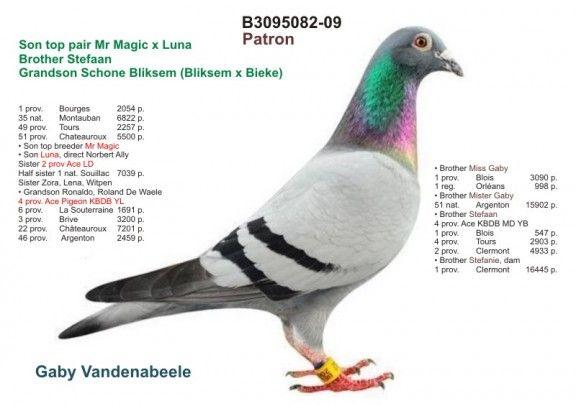 2211248-16 • 100% Vandenabeele G.