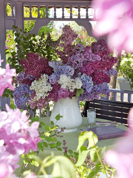Lilacs......my yard is in full bloom in 3 colors right now!