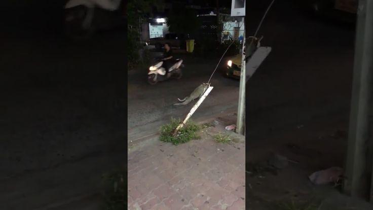 POBRE PERRITO SE ARRASTRA EN LA CALLE