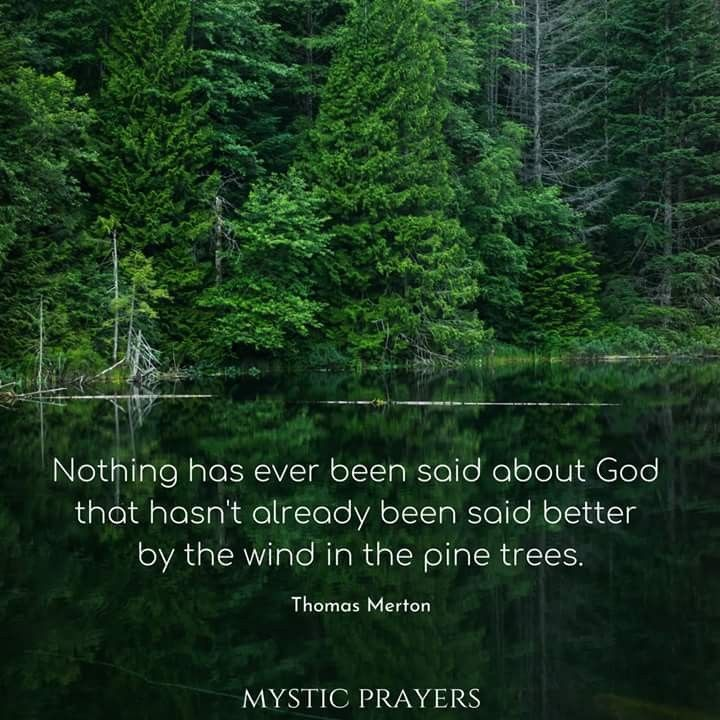Image result for thomas merton on wind in pines