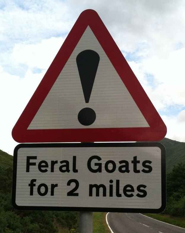 The Highlands' biggest problem. | The 23 Most Wonderfully Scottish Things That Have Ever Happened