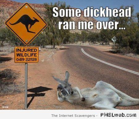50-Aussie-injured-wildlife-meme.jpg (450×385)