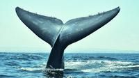 3-Day Chilean Experience Including Whale Watching from Valparaiso-Valparaíso-Chile-Multi-day Tours