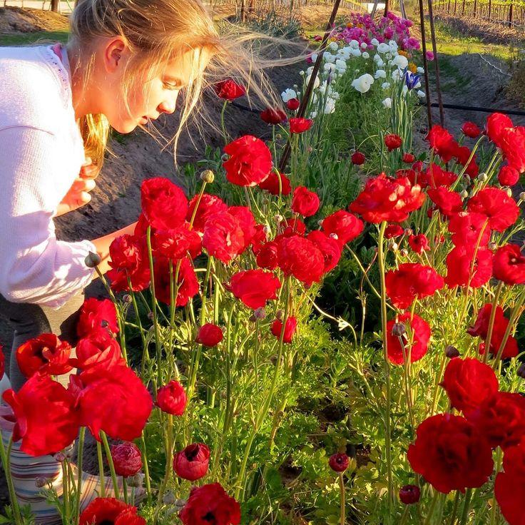Newstead picking garden - Newstead wines, #plettenbergbay #gardenroute #westerncape