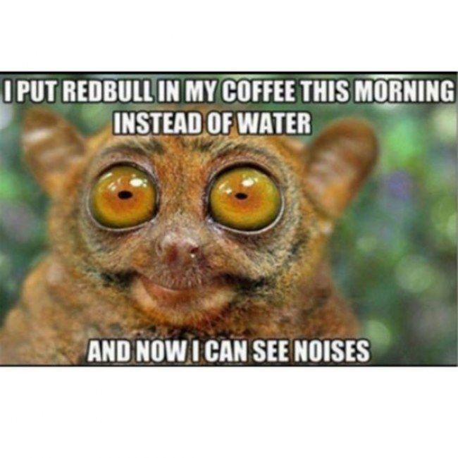 Feature Designer: StrangeStore - Zazzle Blog |Too Much Caffeine Animal