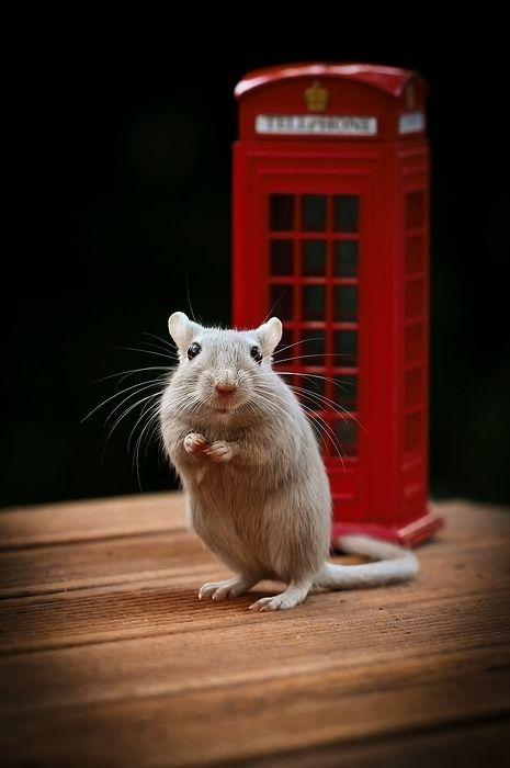Мышкина фотосессия.