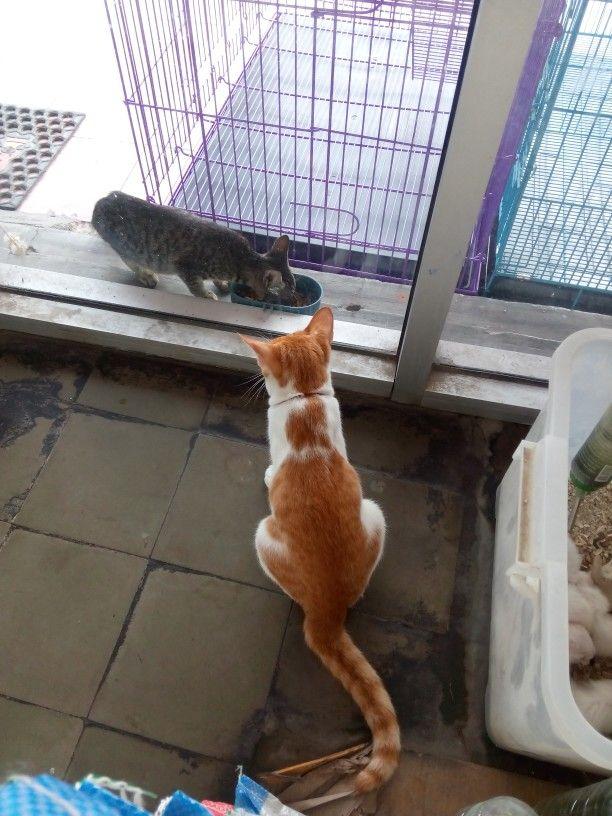 ar°you cat on cat ?