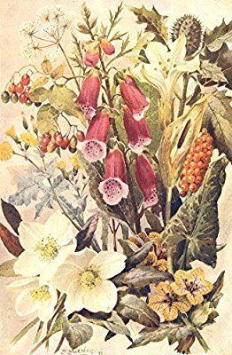 POISONOUS PLANTS: Nightshade. Hellebore. Henbane. Cuckoo-pint. Foxglove;1912