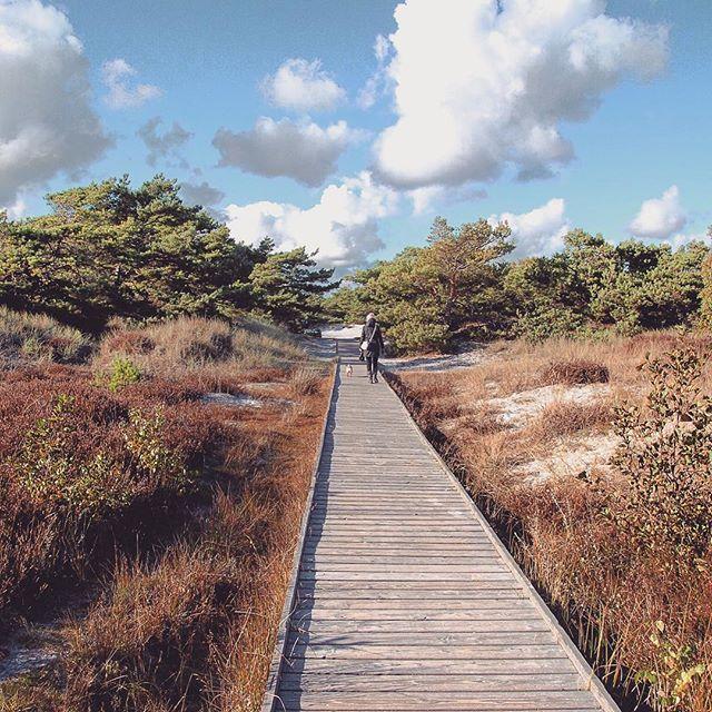 Wooden Path at Dueodde Beach, Bornholm. #dueodde #bornholm #dunes #dünen #denmark #danmark #dänemark