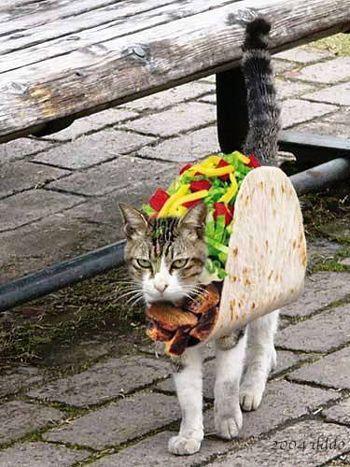 Taco Cat Costume