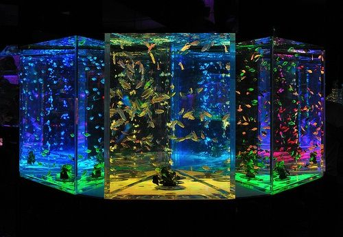 Fish tanks tumblr fish tanks pinterest fish tanks for Awesome fish tanks