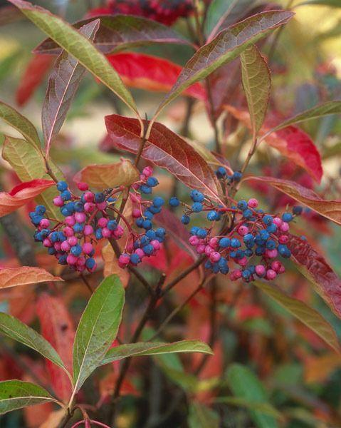 Hmmm -needs a partner  Fabulous autumn colour