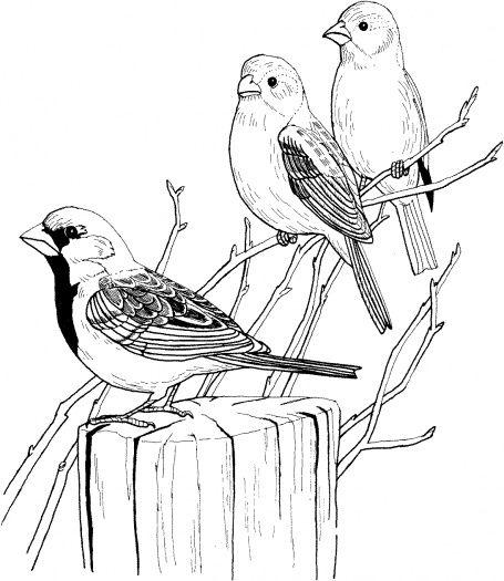Three Sparrows On Tree