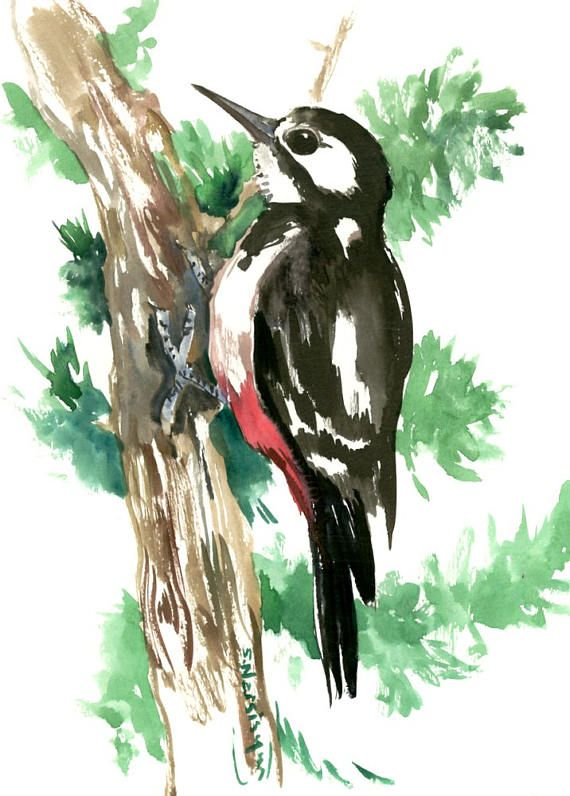 Woodpecker, original watercolor painting, 12 X 9 in, hairy woodpecker, bird art, woodland, forest birds