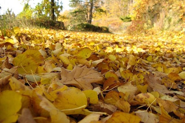 Autumn Leaves. Obora, Zámecký park Průhonice, Průhonice, Czech Republic