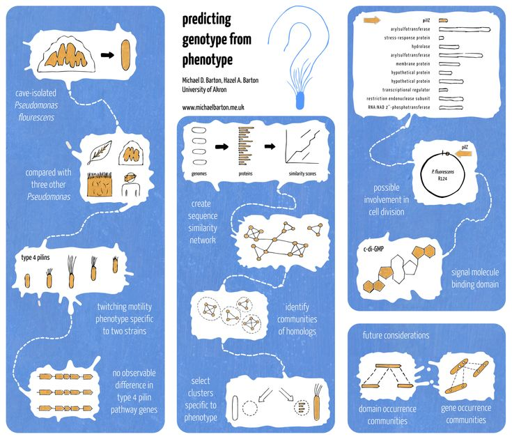 michael barton poster 2012 Academic poster - Predicting genotype from phenotype. Nice, simple flow cartoon style. Very simple, but bold and brave.