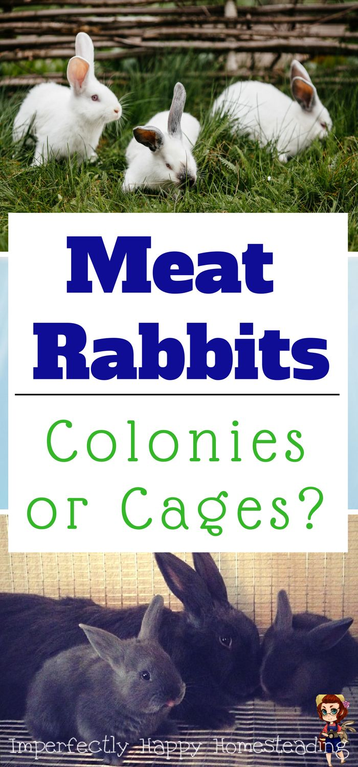 Raising Meat Rabbits - Colonies or Cages, Which is Best? See the pros and cons of both methods for your homestead or backyard farm.