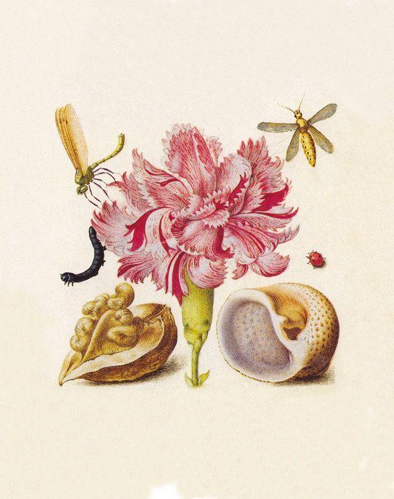 He encontrado este interesante anuncio de Etsy en https://www.etsy.com/es/listing/167626564/botanical-art-print-antique-prints-wall