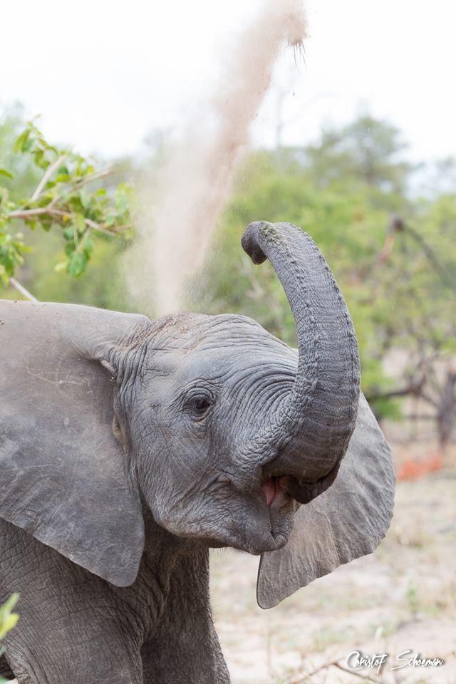 Baby Elephant by Christof Schoeman