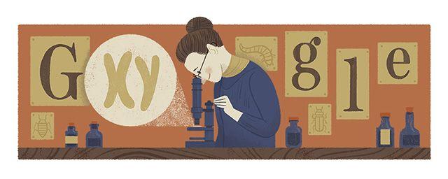 Nettie Stevens Google Doodle: The XY Sex Chromosomes