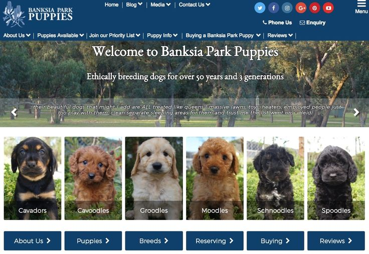 Our updated website: www.banksiaparkpuppies.com