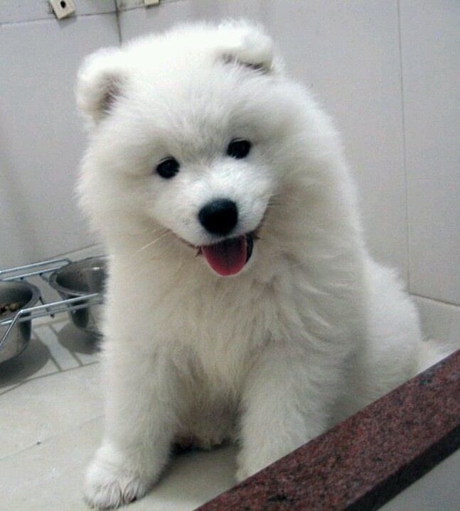 9 Best Dogs Images On Pinterest Adorable Animals Cute Dogs