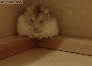 Cute hamster sleeping | Gif Finder – Find and Share funny animated gifs