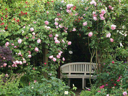 118 beste afbeeldingen van rose constance spry engelse rozen groentetuin en mooie rozen. Black Bedroom Furniture Sets. Home Design Ideas