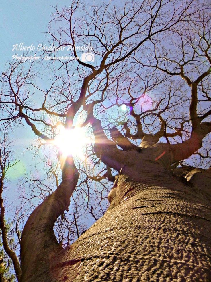 Árbol sin hojas - #Boconó #Trujillo