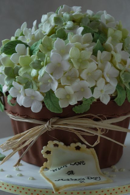 giant cupcake hydrangea blossom plant pot - WOW!