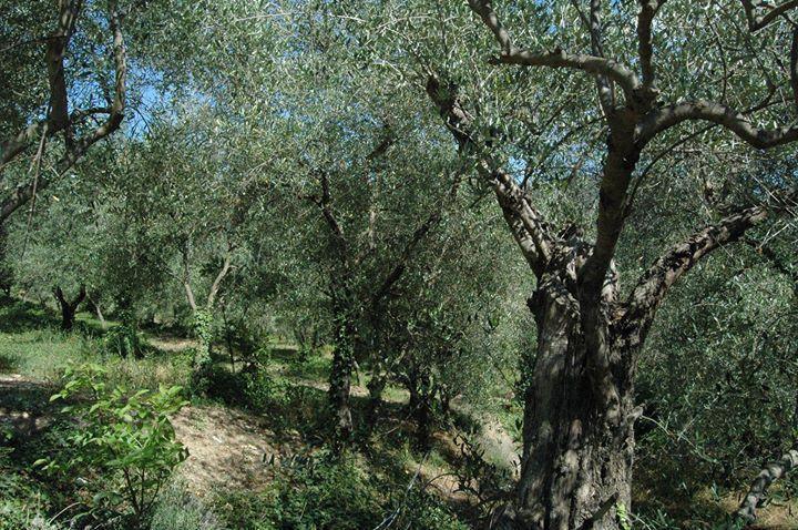 Olivetta San Michele (IM) Località Torre