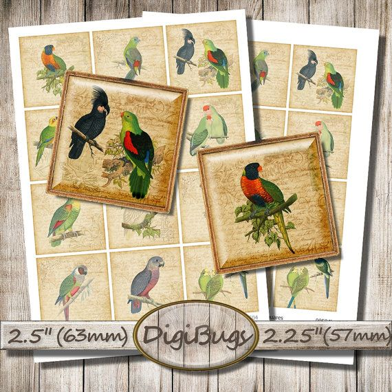 Vintage Parrot Illustrations, Digital Collage Sheet, 2.25 inch, 2.5 inch Squares, Printable Parrot Paper, Instant Download, a8
