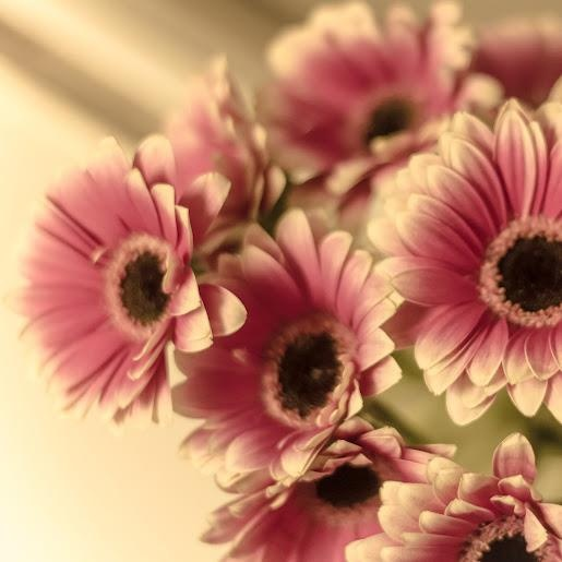 12 best Flowers images on Pinterest Beautiful flowers, Pretty - regale f r k che